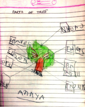 Anaya builds her English vocabulary by naming the parts of a tree.