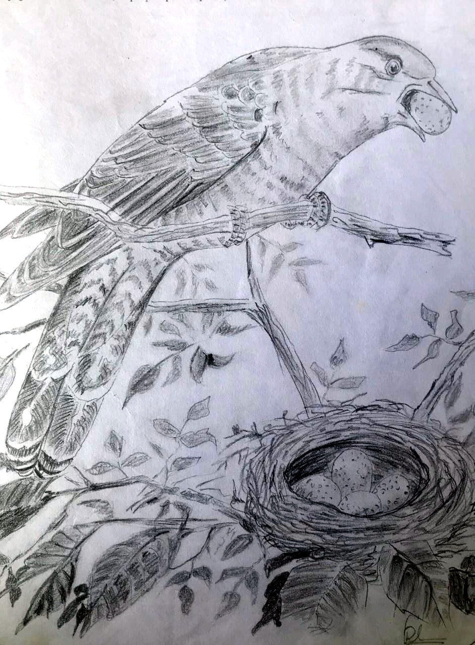 A bird of prey stealing an egg from a nest (Pencil sketch by Rucha Rathod.)