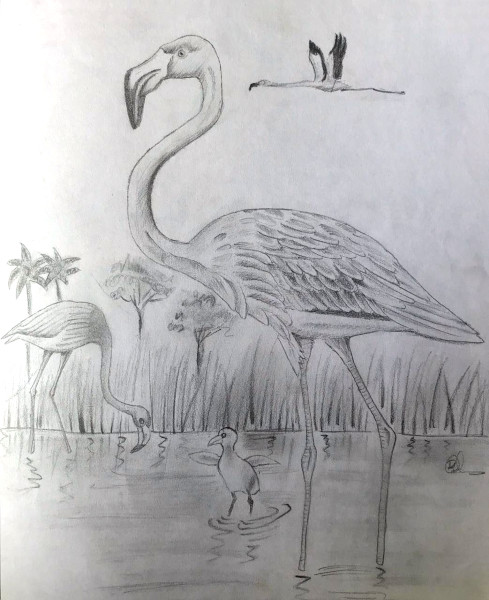 Flamingo in water with baby (Pencil sketch by Rucha Rathod.)