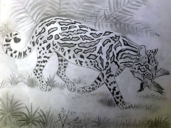 Leopard with prey (Pencil sketch by Rucha Rathod.)